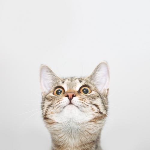 ¡Mi gato está loco!