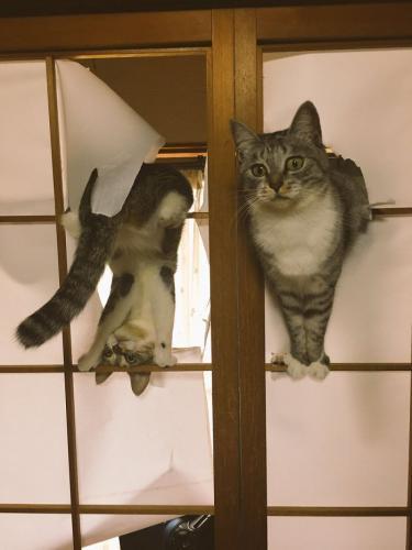 """""""No abrías, así que nos hicimos una puerta nosotros mismos"""""""
