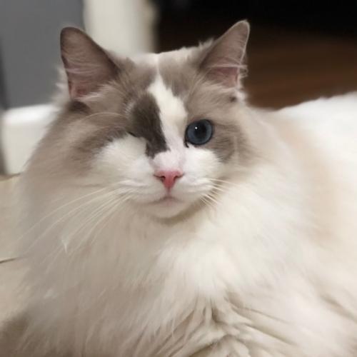 "Un gatito con ""mala actitud"""
