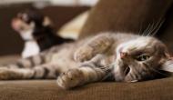 Por qué mi gato sabe SIEMPRE cuando estoy TRISTE