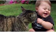 6 errores que cometen todos los dueños de gatos