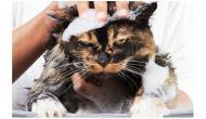 Cómo cuidar bien a tu gato mayor