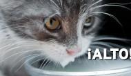 Mi gato está loco, ¡¿qué hago?!