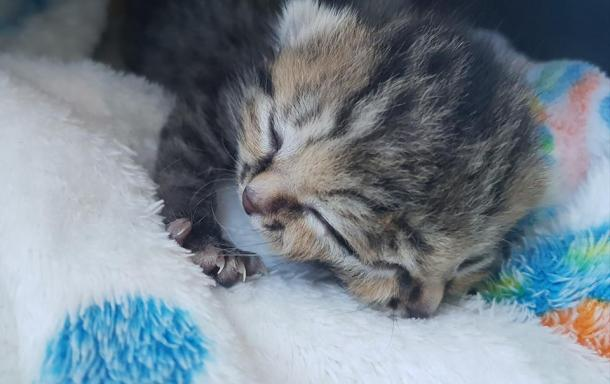 Una gatita especial