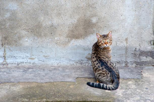Cuando los gatos pegan la cabeza contra la pared...