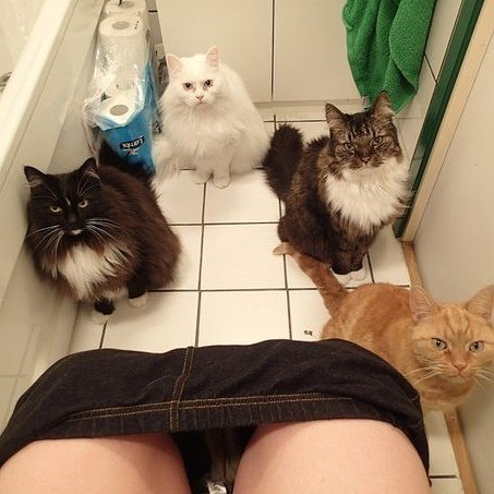 No puedo ir al baño sin compañía.