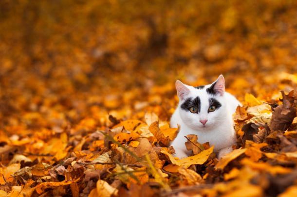 Jueguen en las hojas