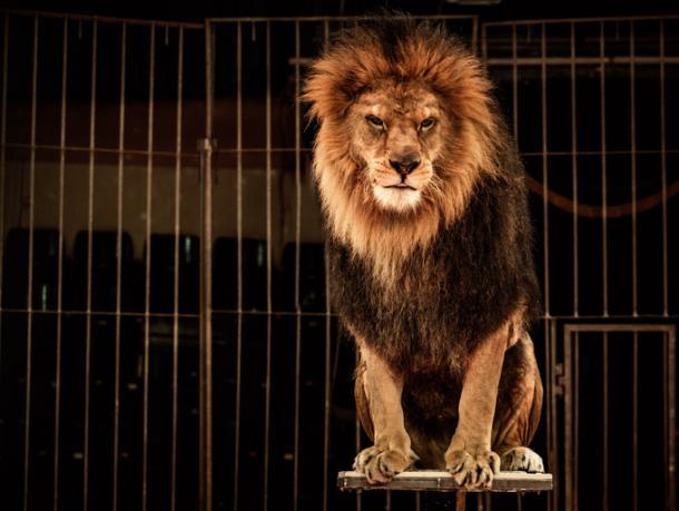 ¡No más animales salvajes!