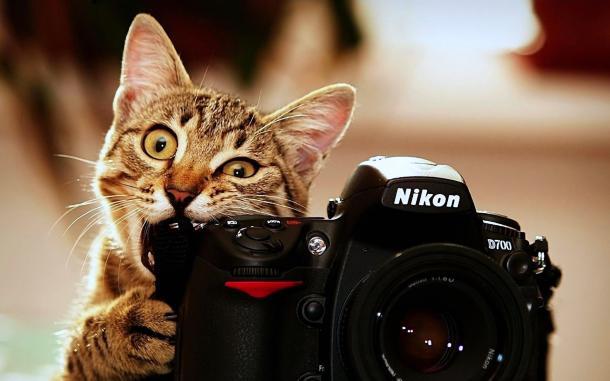 7 TRUCOS para tomarle mejores FOTOS a tu gato