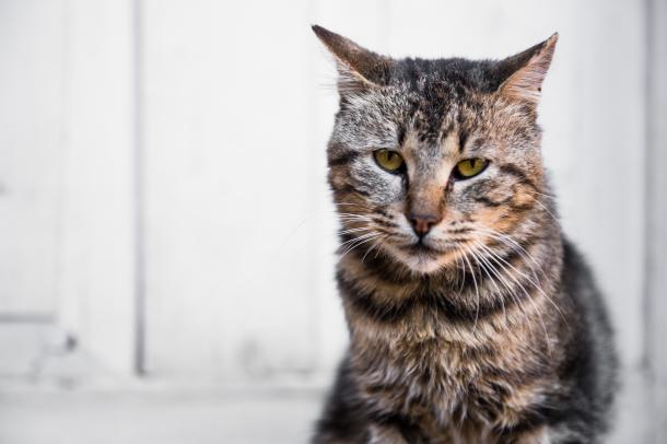 Cuidar a gatos mayores