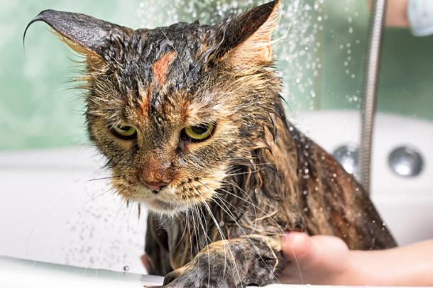¡Hora de bañarse!