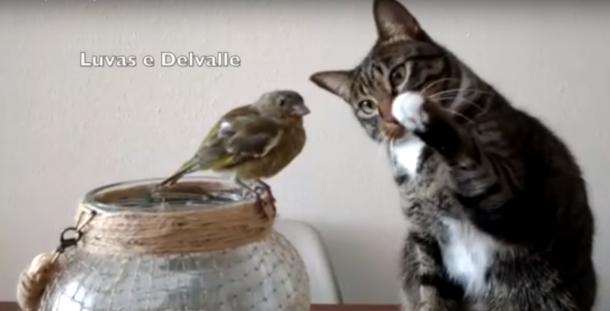 Un gato y un pajarito