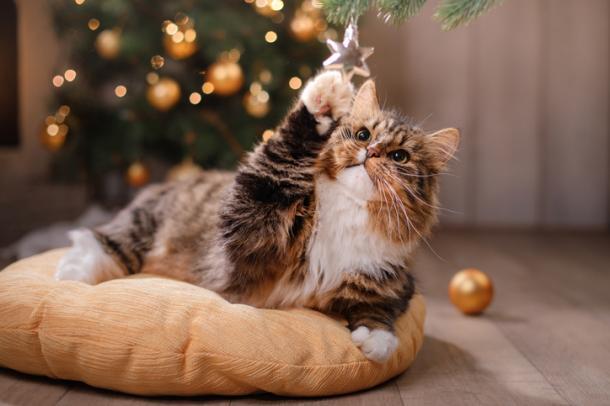 Riesgos navideños