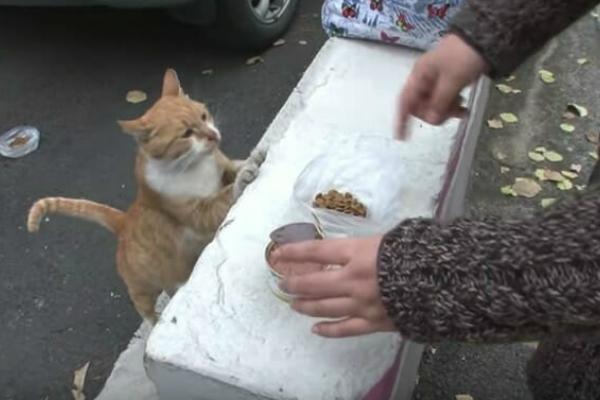 Alimentando gatitos