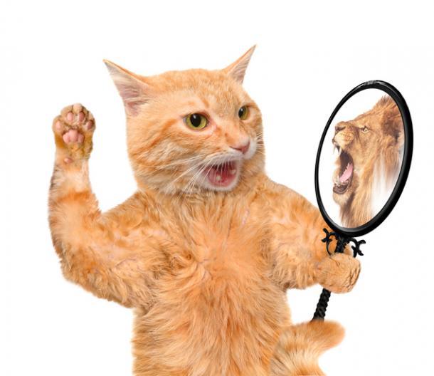 Personalidad felina