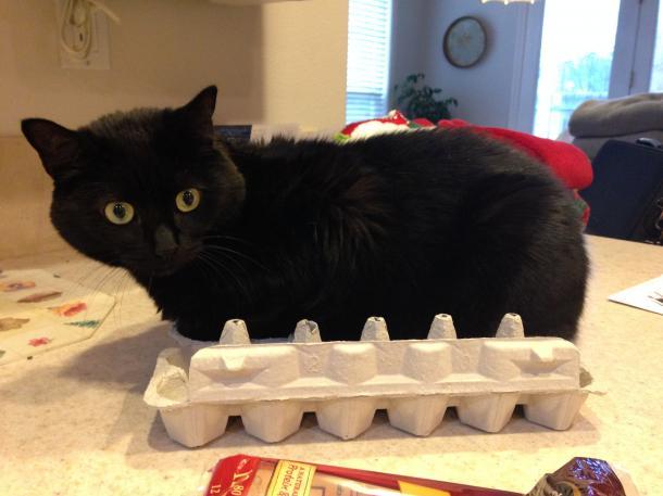 """""""No, claro que no estoy incómodo. Me gusta la forma de esta caja"""""""