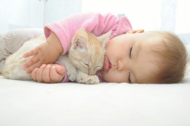 Gatos y bebés