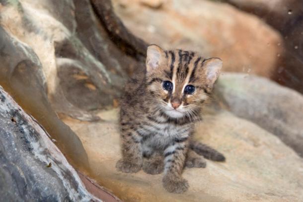 Un pequeño gato pescador