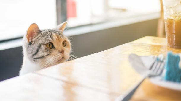 Cuando quiere comer tooodo el tiempo