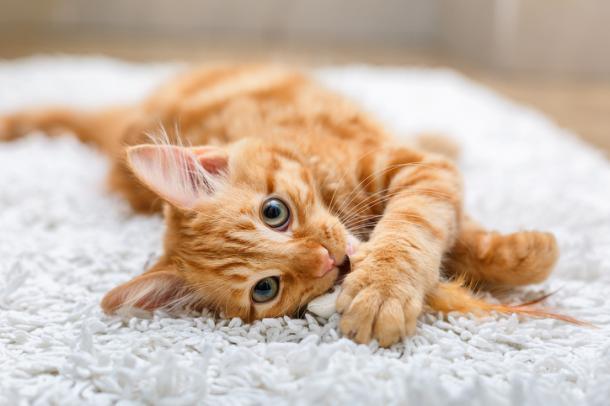 ¿Qué necesita un gato para ser feliz?