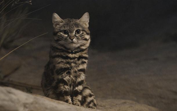 Un gato pequeño pero eficaz
