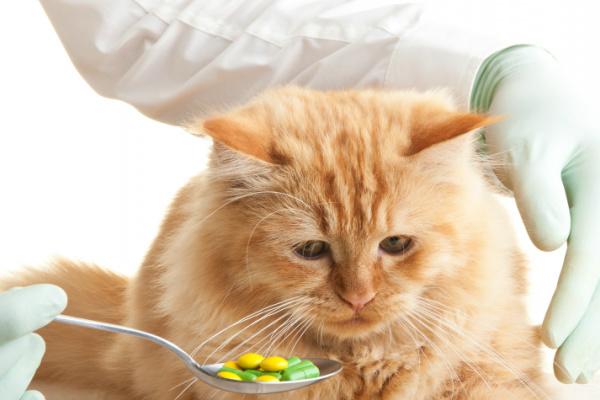 ¿Darle medicina a un gato? ¡NOOOOOO!