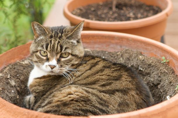 Plantas y gatos: Misión imposible