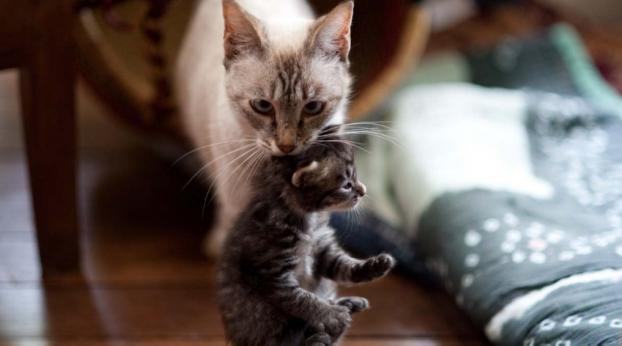 Se coló a la casa de un extraño para proteger a sus bebés