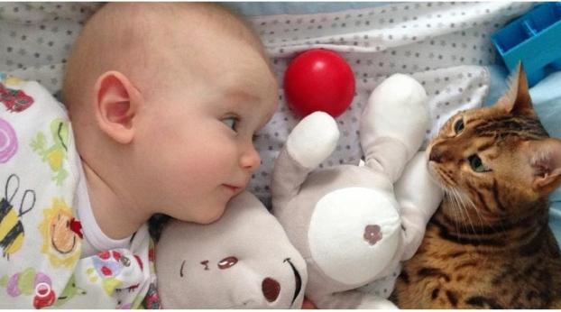 Este bebé le hace cariñitos y el gato reacciona adorablemente