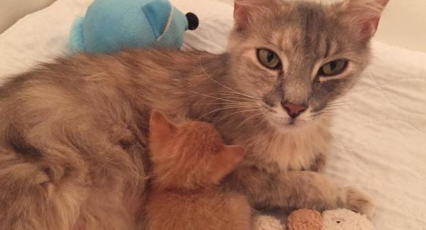 Está mamá que perdió a sus bebés volvió a la vida al adoptar