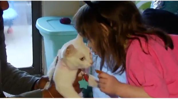 Esta nena ciega se reencontró con su amado gato, ¡y es lo más dulce!
