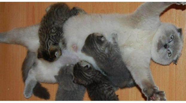 ¿Los gatos NECESITAN tener al menos una camada?