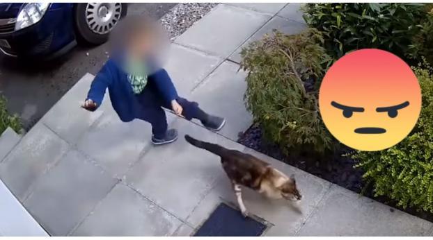 Este niño mortifica al gato de su vecino… ¡pero jamás esperó esta reacción!