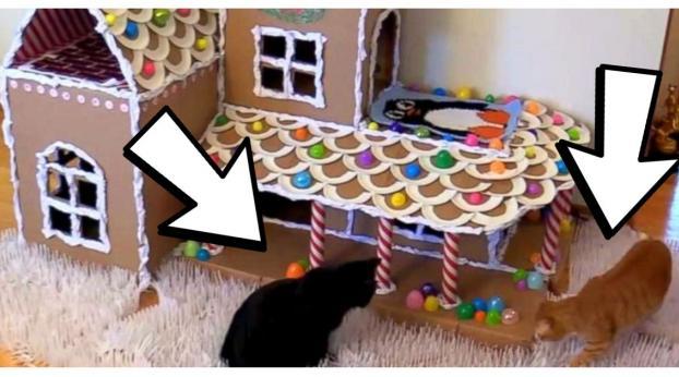 VIDEO: Así se hace una CASA de JENGIBRE para gatos, ¡es muy divertido!