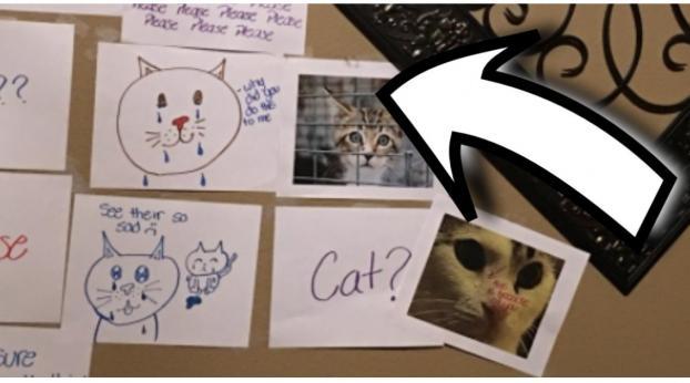 Esta niña encontró una solución muy ingeniosa para que la dejaran tener un gato
