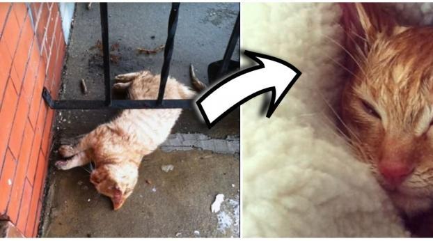 Encontró una gatita congelada en su puerta y lo que hizo le salvó la vida