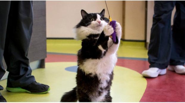 Conoce al primer gato biónico que está haciendo historia en Bulgaria