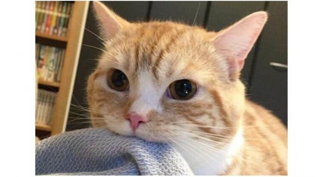 Por qué RAYOS tu gato SUCCIONA las mantas