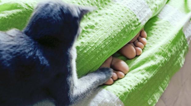 ¡AUXILIO! Mi gato me muerde los pies en la noche