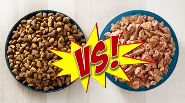Comida SECA o HÚMEDA, ¿cuál es mejor?