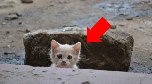 Este hombre encontró un gatito abandonado en un barrio de mala muerte. Años más tarde, ¡está irre...