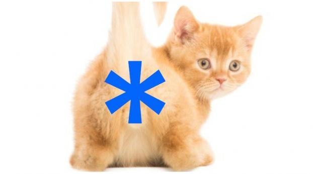 Si tu gato te enseña el asterisco, debes estar muy orgulloso