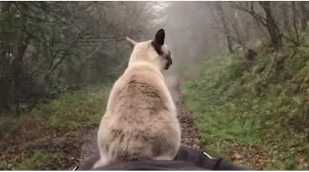 Este gato tiene la manera más insólita de pasear