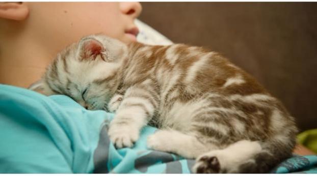 ¿Por qué a tu gato le encanta dormir acurrucado a tu lado?