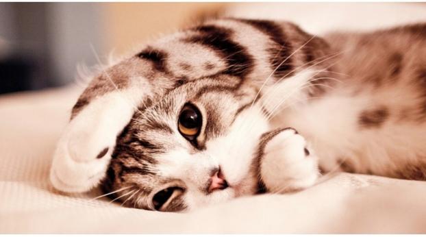 Tu gato podría estar enfermo y no lo sabes