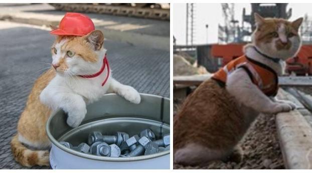 El supervisor de la OBRA es un gato, ¡tienes que verlo en acción!