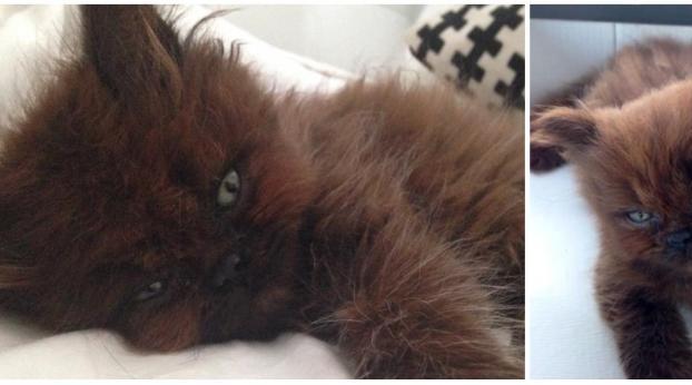 Adoptó un raro gatito y un año más tarde ¡la diferencia es asombrosa!