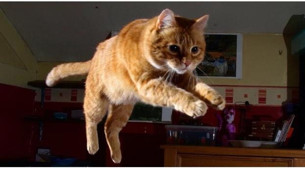 La extraordinaria razón por la que tu gato corre como loco a las 3 a.m.