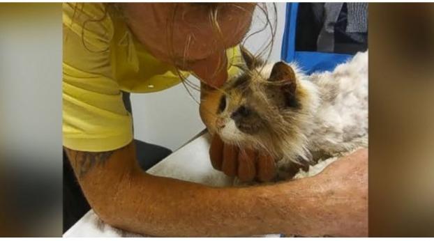 El reencuentro de esta gata ciega con su humano después de varios meses, ¡te va a hacer llorar!