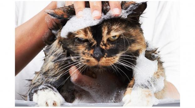 BAÑAR al gato: ¿es PÉSIMA IDEA o es necesario?